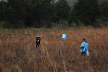 photo of UK Lewis Honors students planting trees in Daniel Boone National Forest