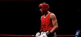 photo of boxer