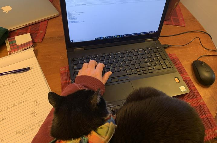 working on a laptop with cat on shoulder - In This Together