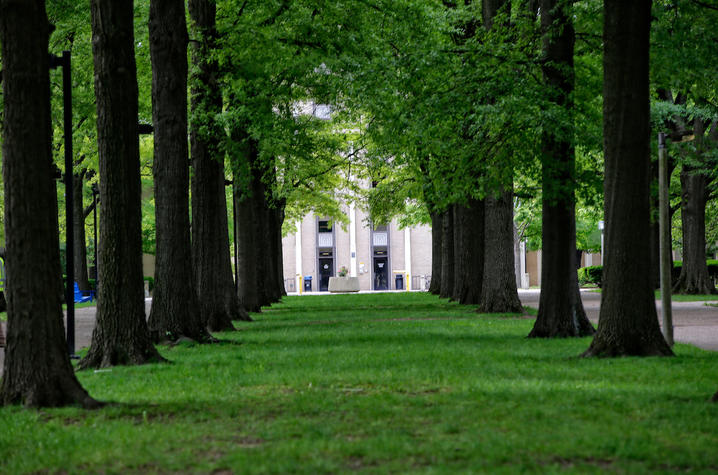 Photo of tree canopy on campus