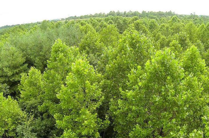 A forest in Eastern Kentucky