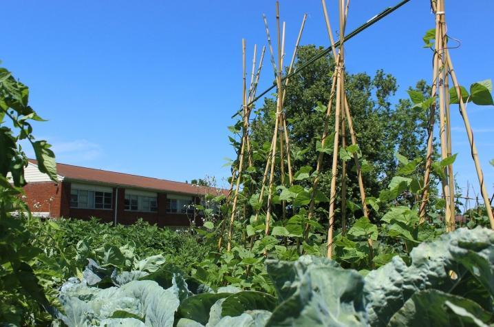 Photo of Shawneetown garden
