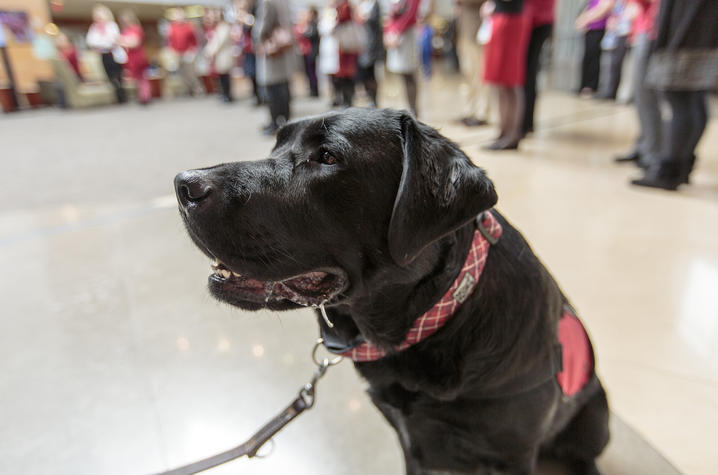 Photo of Carmine, Gill Heart Institute's therapy dog
