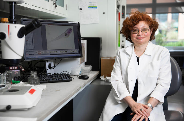 University of Kentucky researcher Emilia Galperin has been awarded a $1.9 million grant to continue her research examining cell signal pathways and genetic disease. Pete Comparoni   UK Photo.