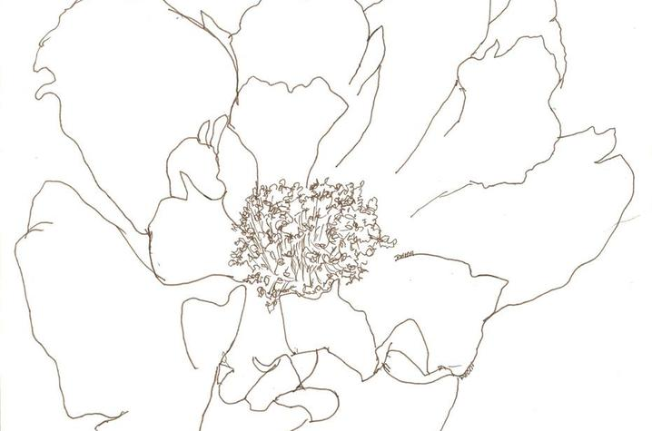 photo of floral drawing