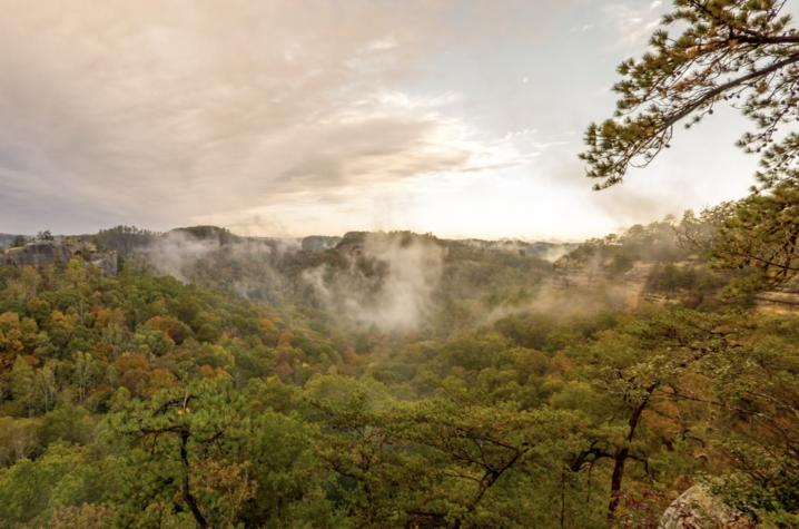 photo of Kentucky landscape/forest