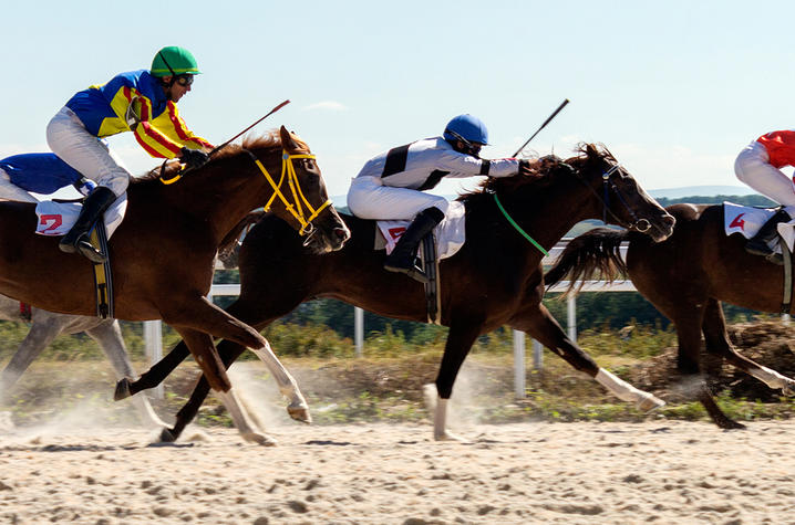 Horses running on a dirt track