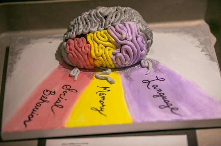 photo of brain art