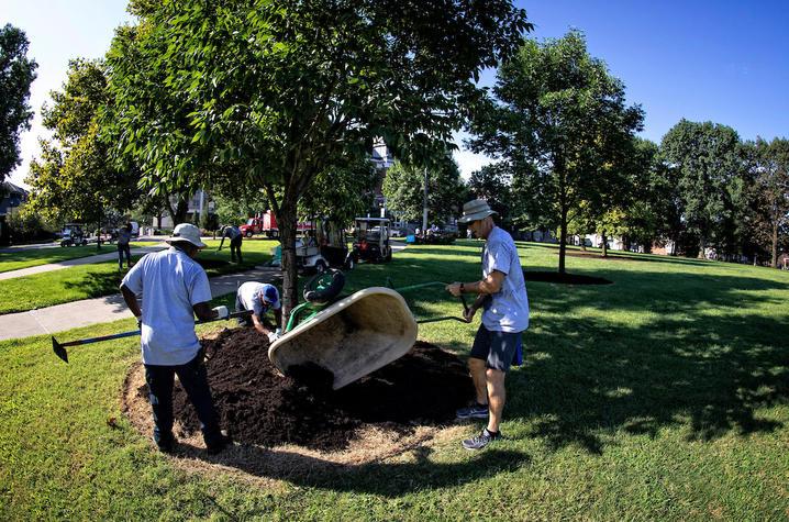 photo of men mulching a tree