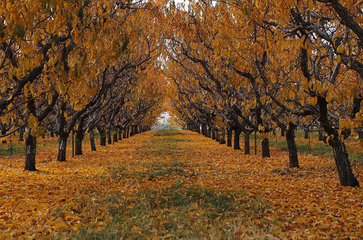 photo of tree lined path in fall - digital camera workshop