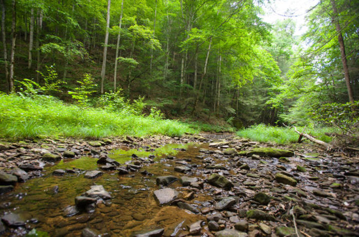 Photo of Robinson Forest