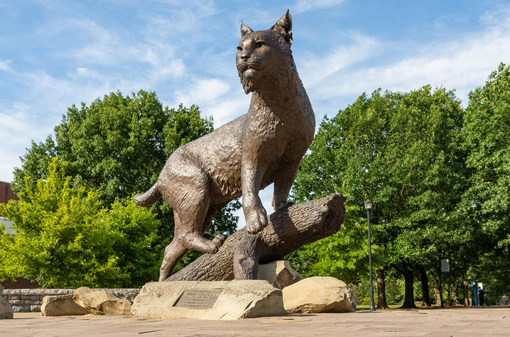 photo of Bowman, the wildcat statue