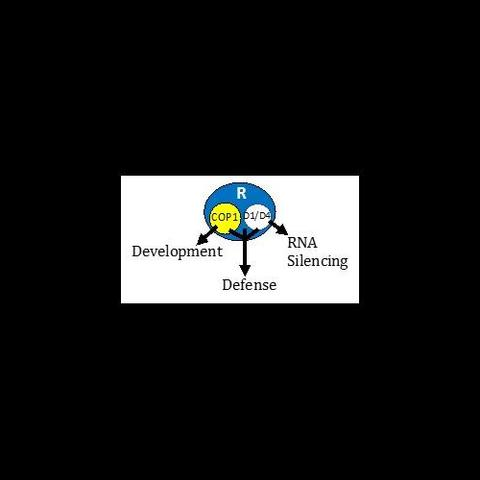 Plant Defense and Development