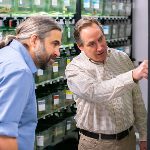 Photo of Jeramiah Smith (L) and Randal Voss in the axolotl stock center at the University of Kentucky