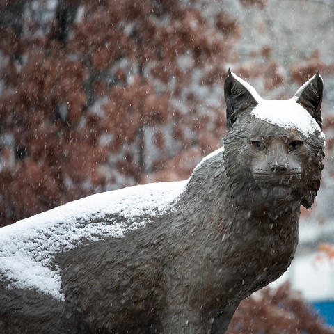 photo of Bowman wildcat statue in Wildcat Alumni Plaza with snow on it