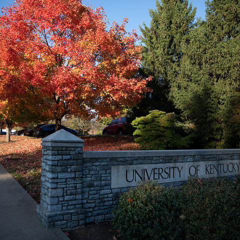 photo of University of Kentucky sign with tree behind it with bright red fall colored leaves.