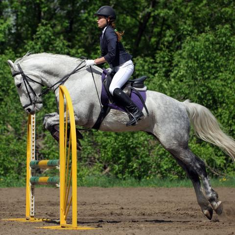 stock photo of equestrian jumping