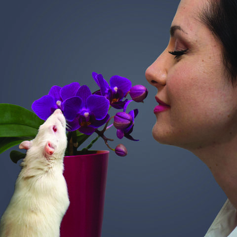 Photo of a rat and a woman smelling a flower
