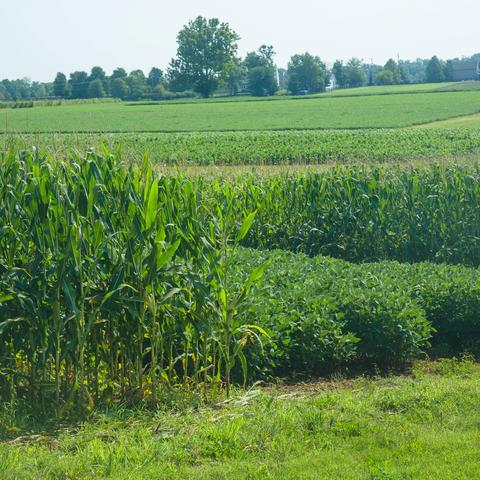 photo of crops