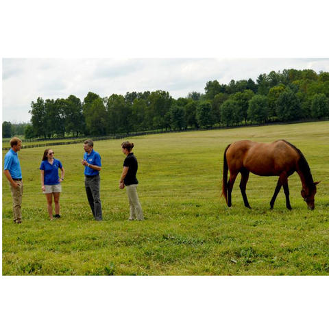 Four people in pasture on left and horse grazing on right