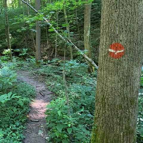 A trail in the Tom Dorman State Nature Preserve