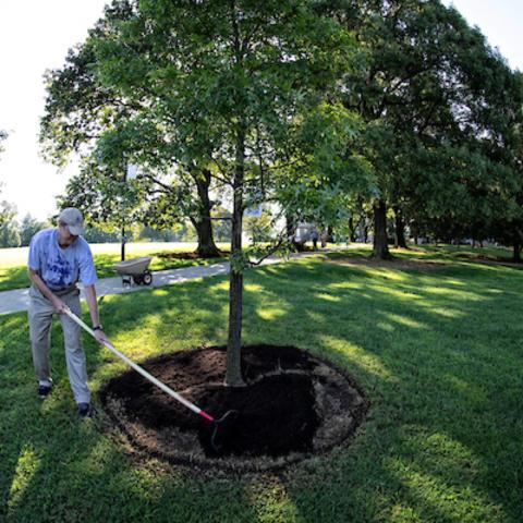 A man planting a tree.