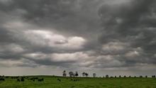 Animals - Threatening Weather