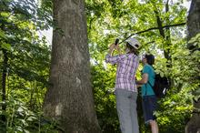 photo of Ellen Crocker and Bradford Condon collecting data from a tree.