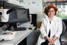 University of Kentucky researcher Emilia Galperin has been awarded a $1.9 million grant to continue her research examining cell signal pathways and genetic disease. Pete Comparoni | UK Photo.