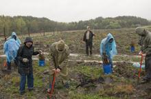photo of volunteers planting trees