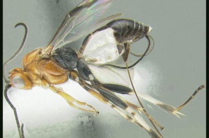 Wasp Named for Paul Baker