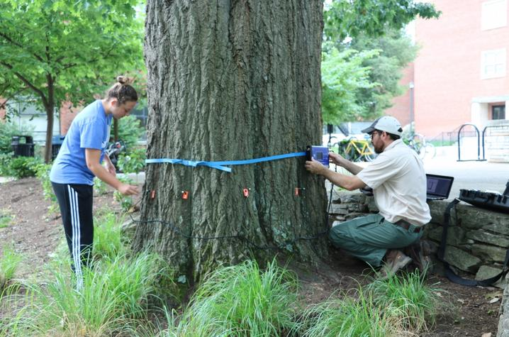 photo of student Taylor Renfro helping Stacy Borden measure a tree