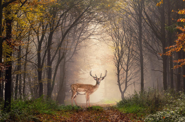 A deer in the woods - ThinkStock photo