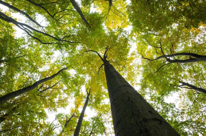 stock photo of trees
