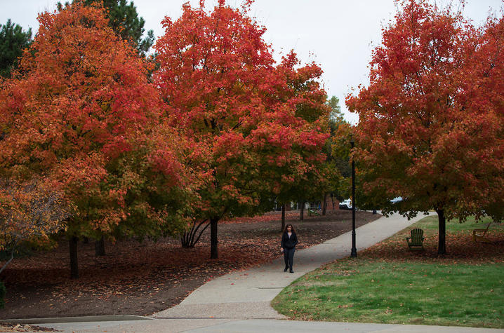 Photo of fall foliage on campus