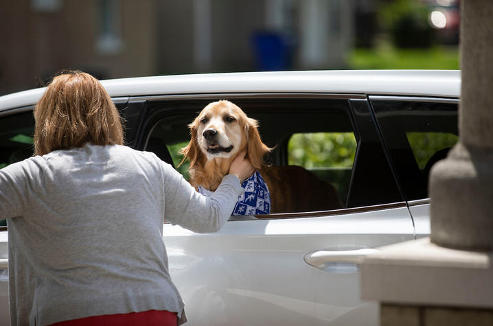 photo of therapy dog in car