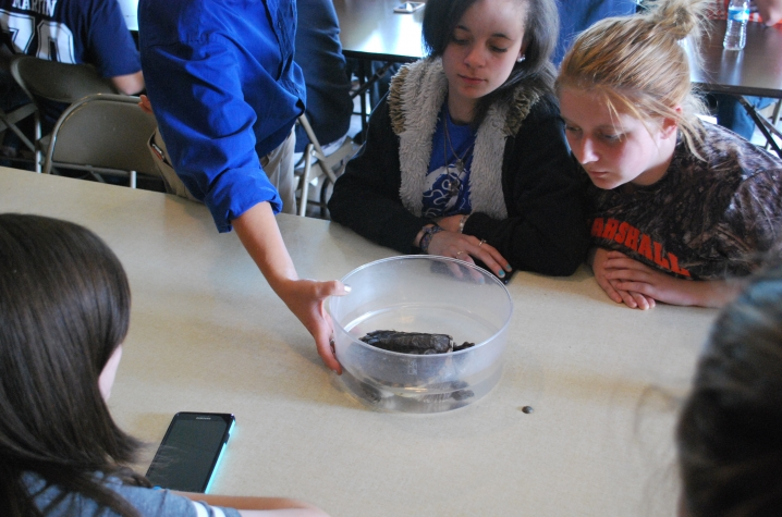 photo of Marshall Co. students looking at turtle as part of CAER, Design PGDP project