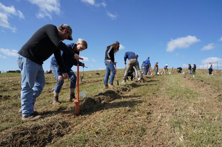 photo of forestry students plant seedlings at Star Hill Farm