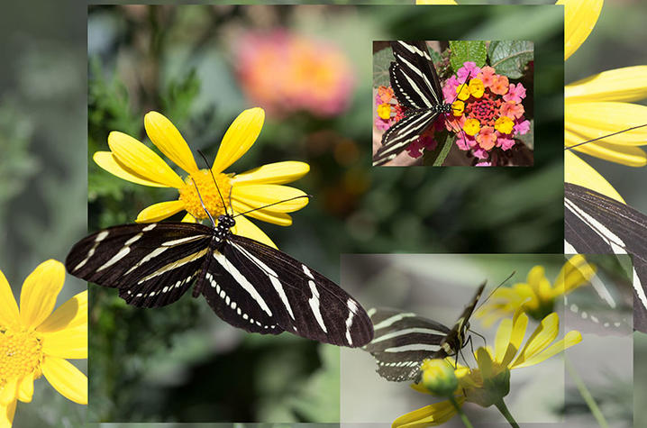 photo of layered pictures of butterflies and flowers from Photoshop course - Fine Arts Institute