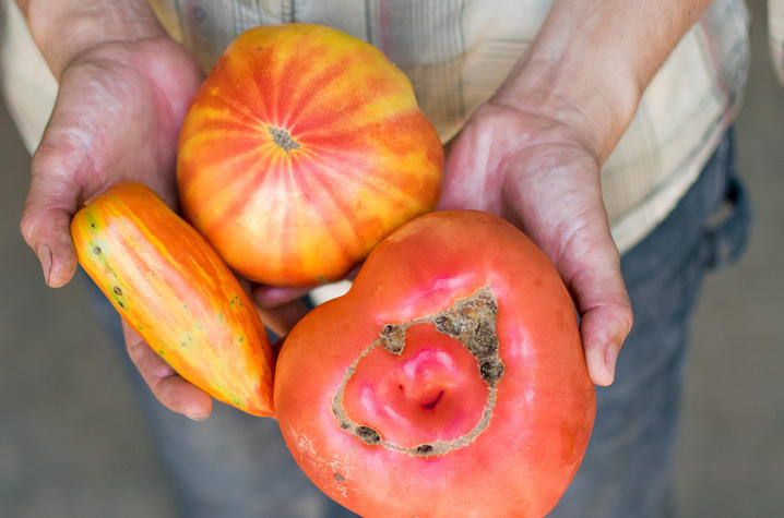 UK Dining Launches Two New Local Food Initiatives for 2018-19 | UKNow