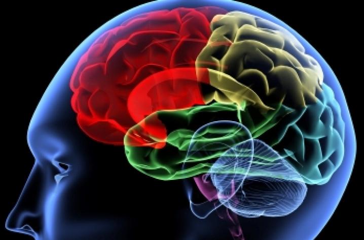 Understanding Brain Mechanisms Of >> Sanders Brown Researchers Produce New Research On Little Understood