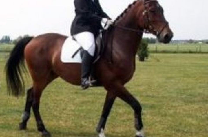 UK's Saddle Up Safely Program Receives Partnership in Safety Award