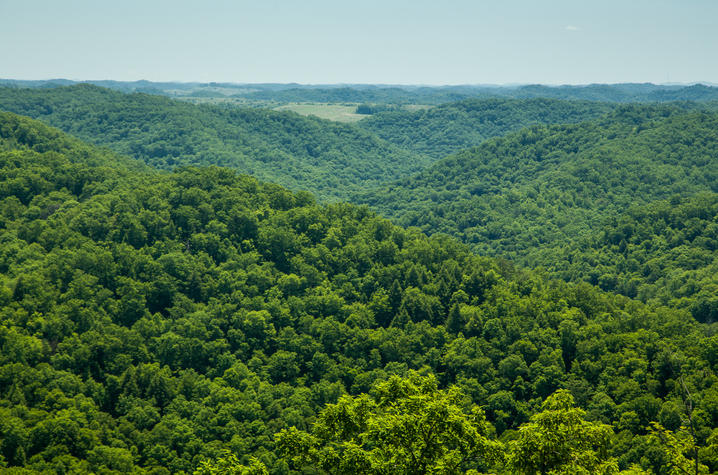 Aerial photo of Robinson Forest