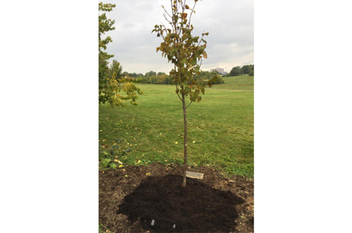 Photo of tree planted for 2020 Walk to Remember