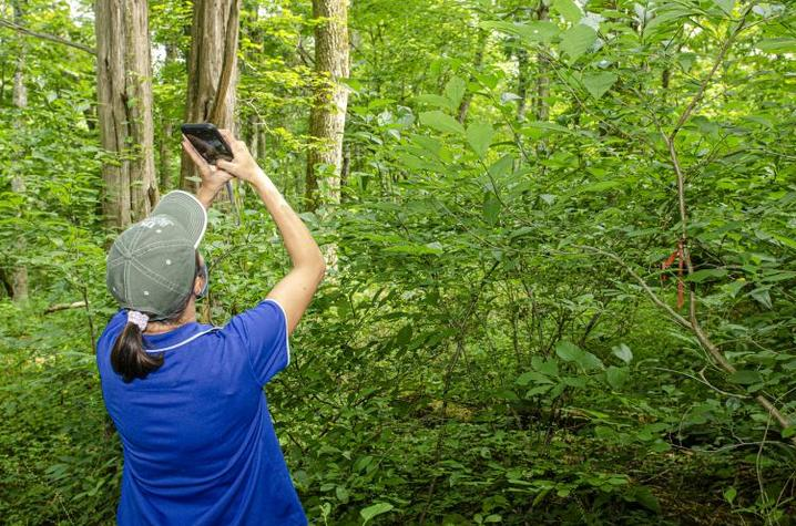 Individual in forest taking photo of trees with cell phone