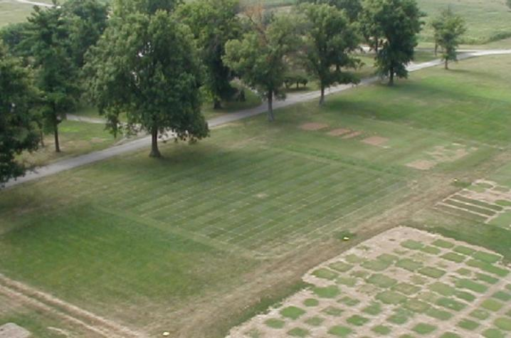 photo of turfgrass research