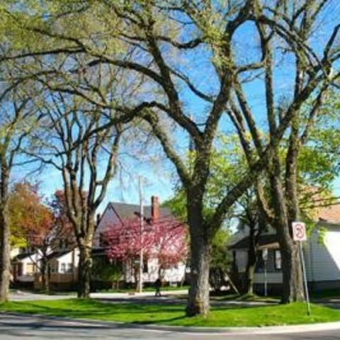 A tree-lined neighborhood street