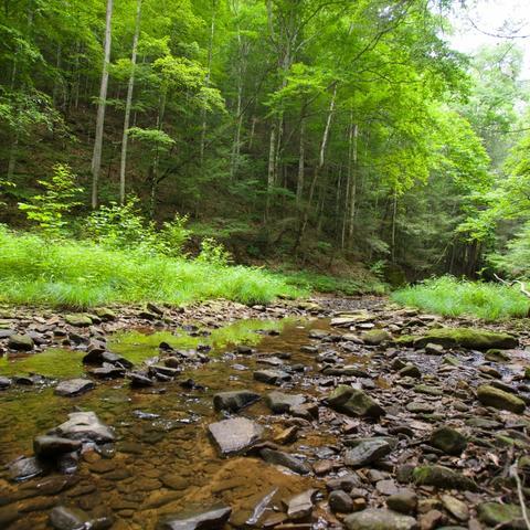 woodlands short course