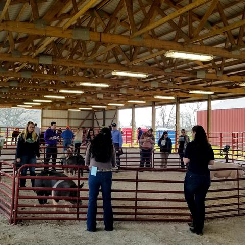 UK Hosts Livestock Judging