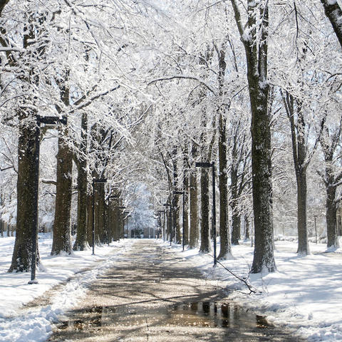 Snow on trees.